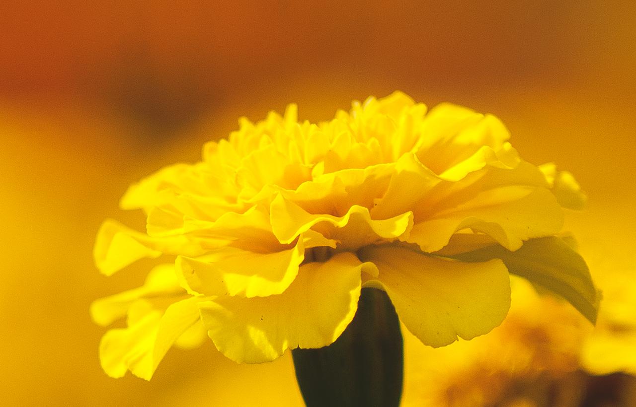 zoltykwiat