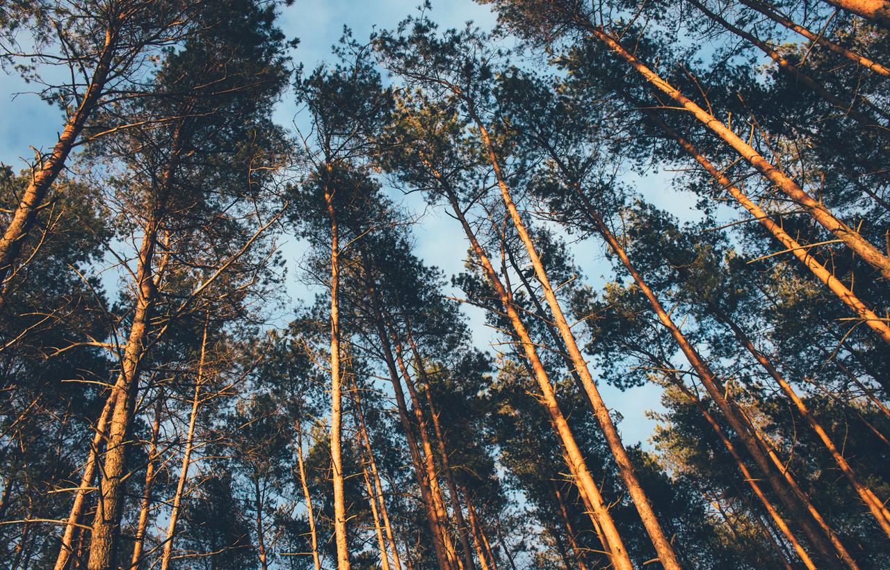 drzewawniebie