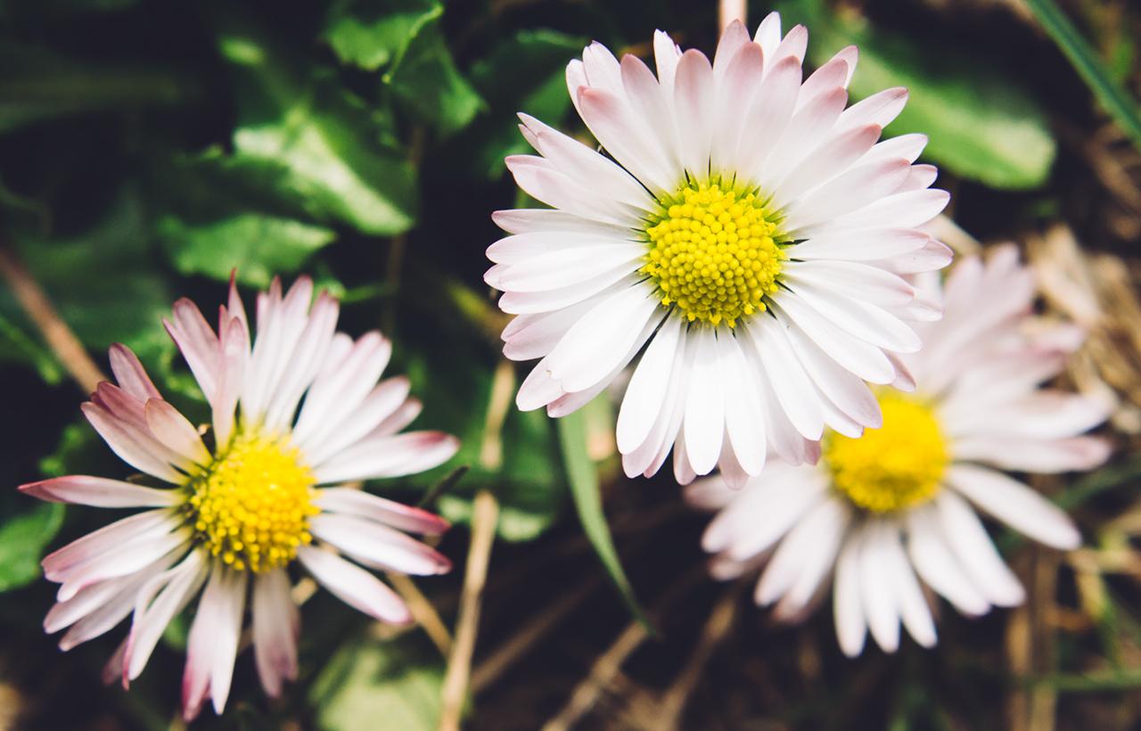 kwiatkii