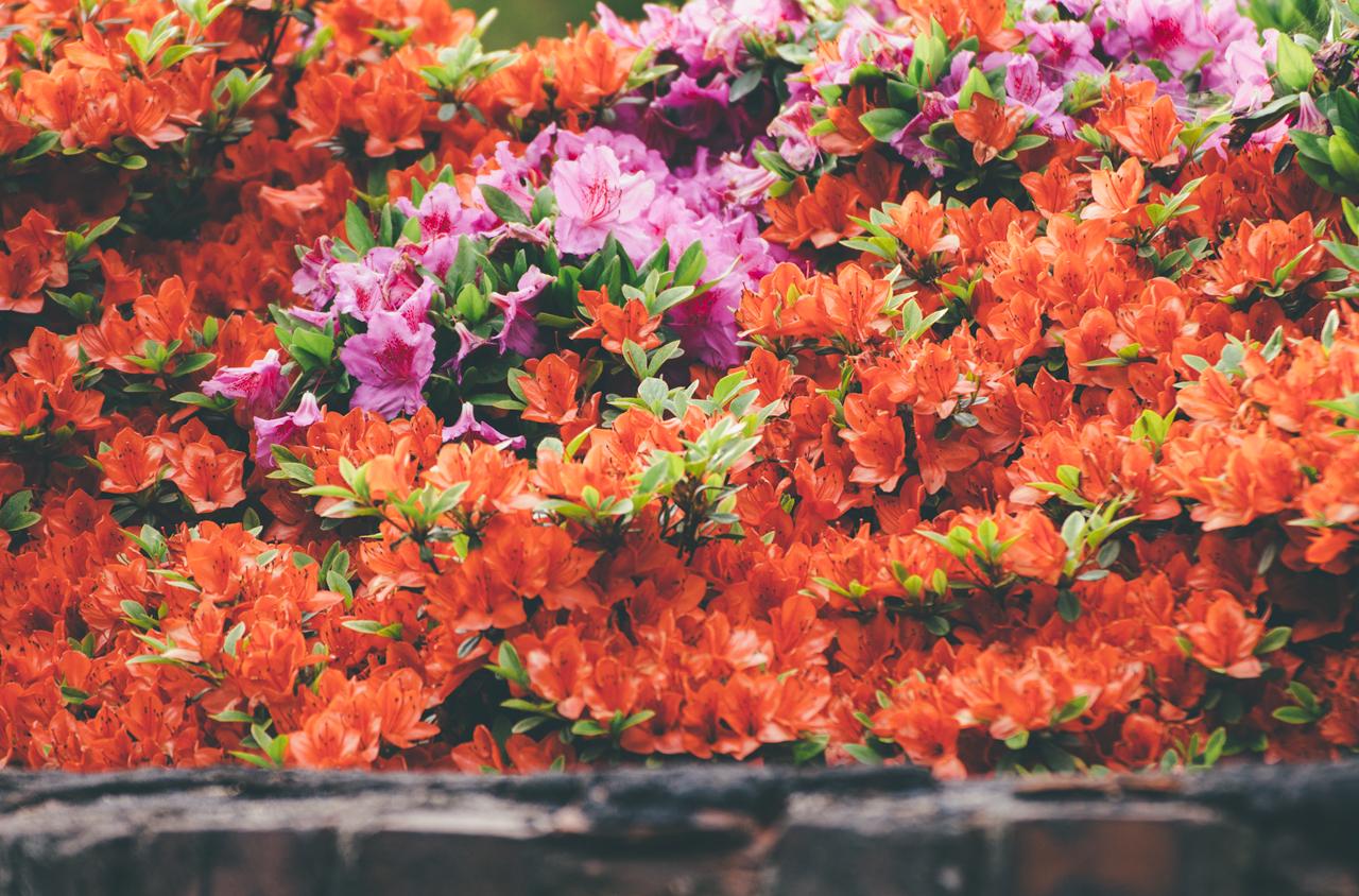 kwiatyogrod