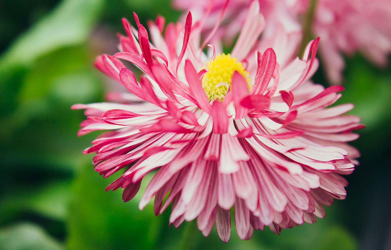 ogrod_kwiat